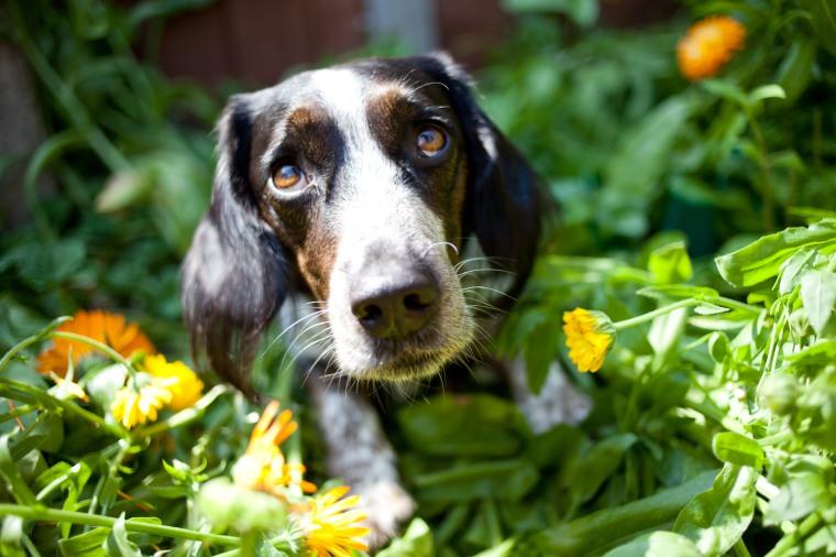 Pet Photography Peterborough